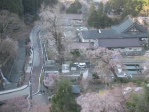 桜らんまん゜*。(o∀)b。*゜