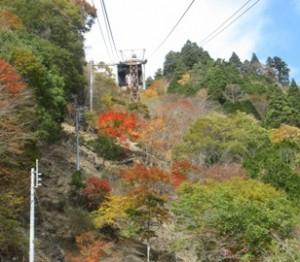 紅葉が綺麗ですよ♪(σ´ω`)σ