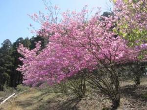 山頂の花開花!?