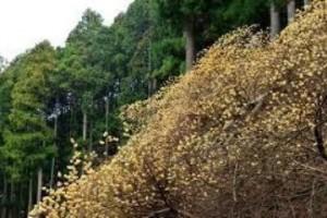 しだれ桜の次はゴンドラからのお花見がオススメ!